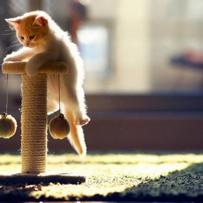 茶トラ白猫子猫キャットタワー
