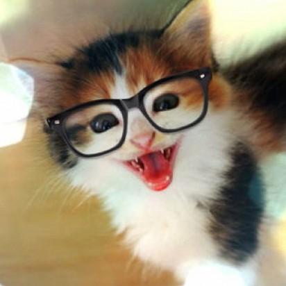 三毛猫子猫メガネ