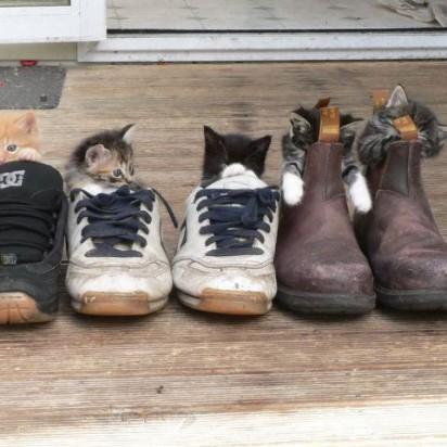 茶トラ猫キジトラ猫黒猫サバトラ白猫サバトラ猫子猫靴