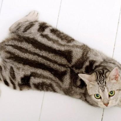 サバトラ白猫ウッドデッキ