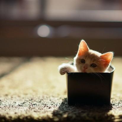 茶トラ白猫子猫箱