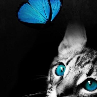 サバトラ猫子猫蝶