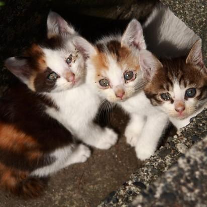三毛猫とび三毛猫キジトラ白猫子猫屋外