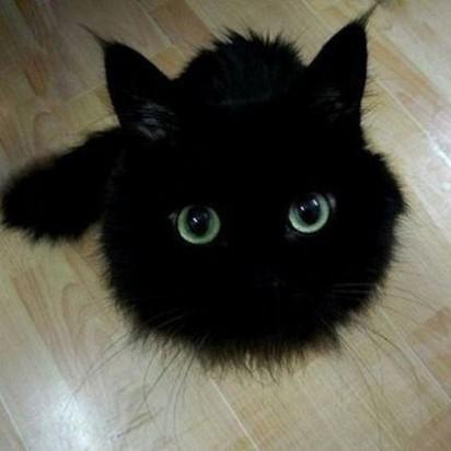 黒猫子猫フローリング
