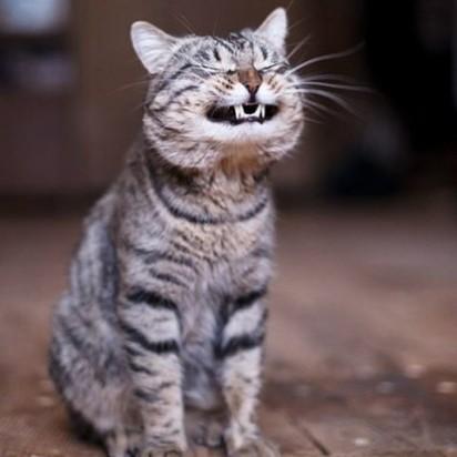 キジトラ猫屋外