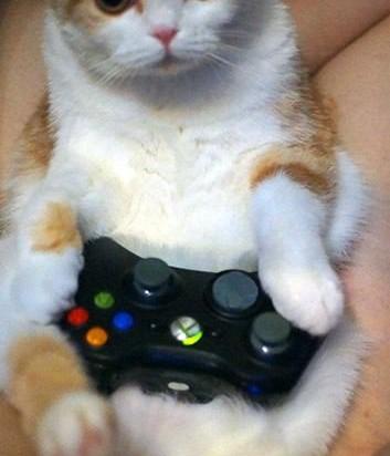 茶トラ白猫子猫コントローラー