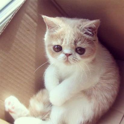 茶トラ白猫子猫ダンボール