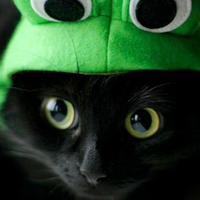 黒猫カエル