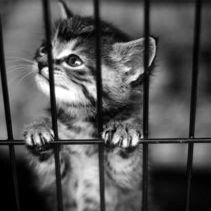 キジトラ猫子猫檻