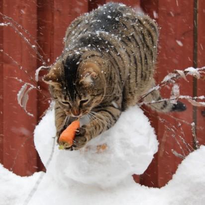 キジトラ猫雪だるま