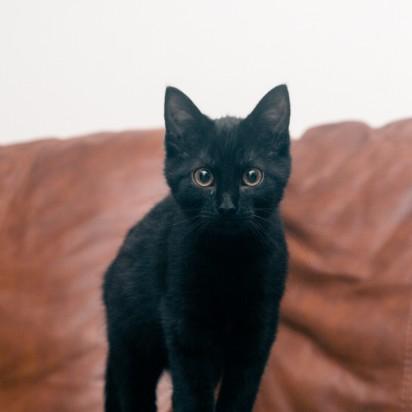 黒猫子猫ソファー