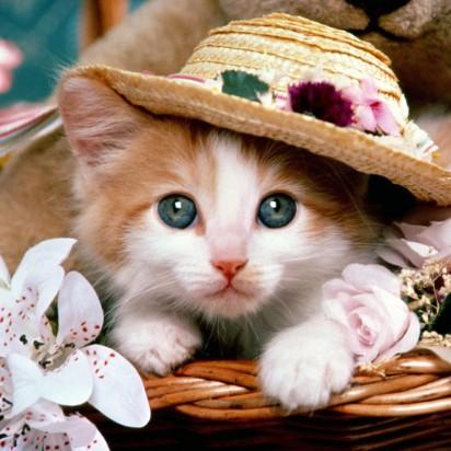 茶トラ白猫子猫帽子