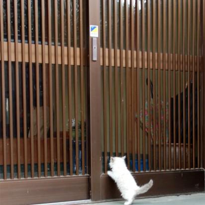 白猫子猫玄関