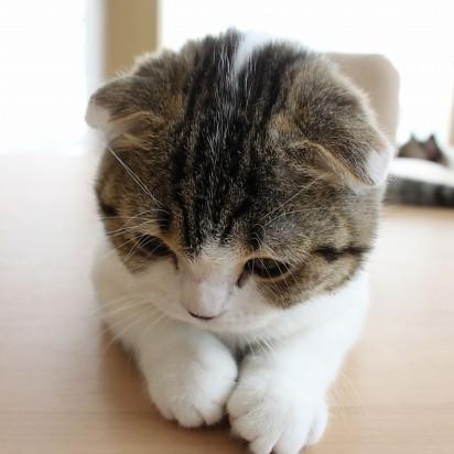 サバトラ白猫子猫屋内