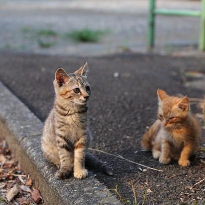 キジトラ猫茶トラ猫子猫屋外