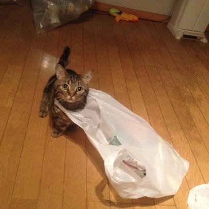 キジトラ猫子猫ビニール袋