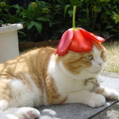 茶トラ白猫花屋外