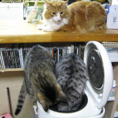 サバトラ猫茶トラ白猫炊飯器