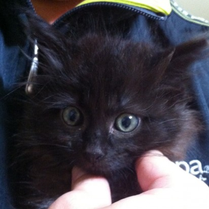 黒猫子猫手