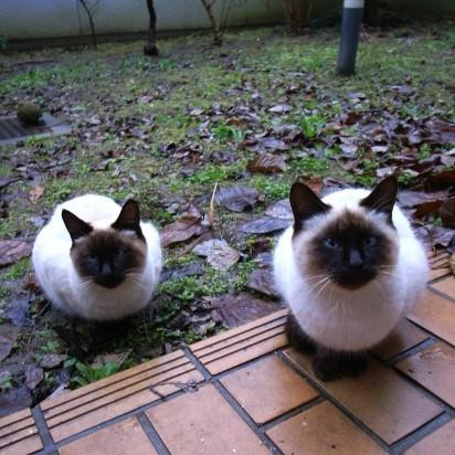 ポインテッド猫庭