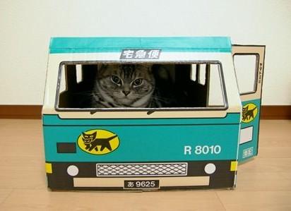 キジトラ猫宅急便
