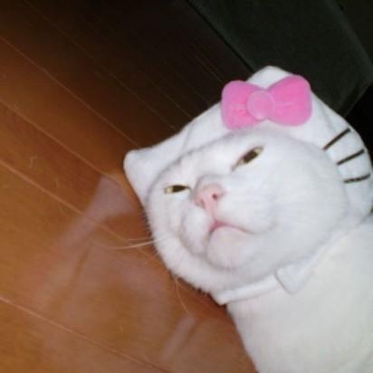 白猫かぶりもの