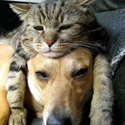 キジトラ猫犬