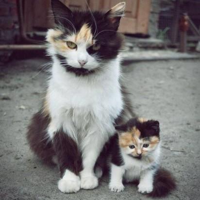三毛猫子猫親子
