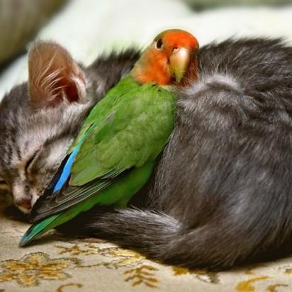 キジトラ猫子猫鳥