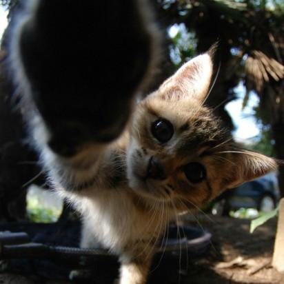 キジトラ猫子猫屋外