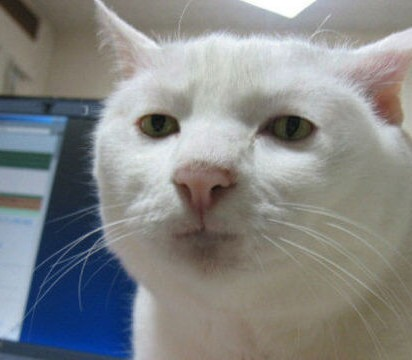 白猫パソコン