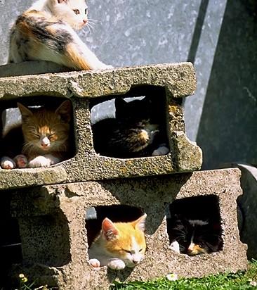 三毛猫茶トラ白猫キジトラ猫屋外