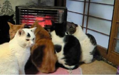 黒白猫茶トラ猫サバトラ白猫黒猫ストーブ