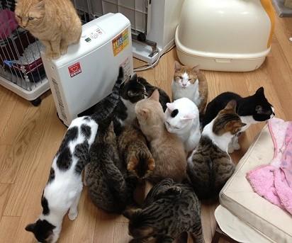 キジトラ猫白黒猫茶トラ白猫ハチワレ猫茶トラ猫ストーブ