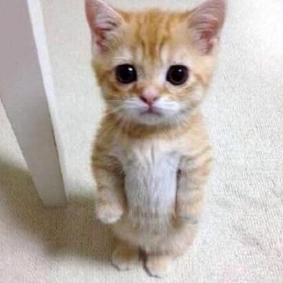 茶トラ白猫子猫