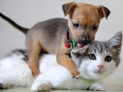 サバトラ白猫犬