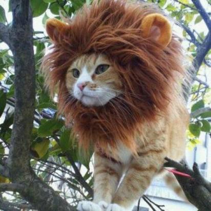 茶トラ白猫ライオン