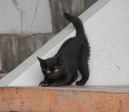 黒猫子猫屋外