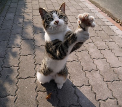 キジトラ白猫子猫レンガ