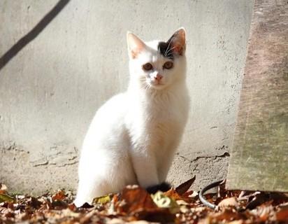 黒白猫屋外