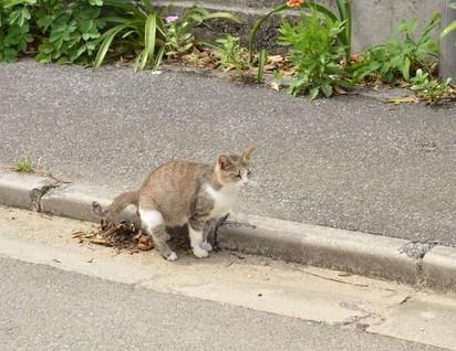 キジトラ猫道路