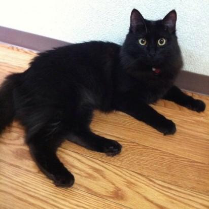 黒猫フローリング