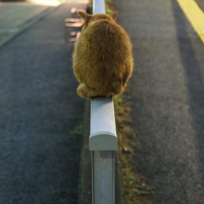 茶トラ猫道路