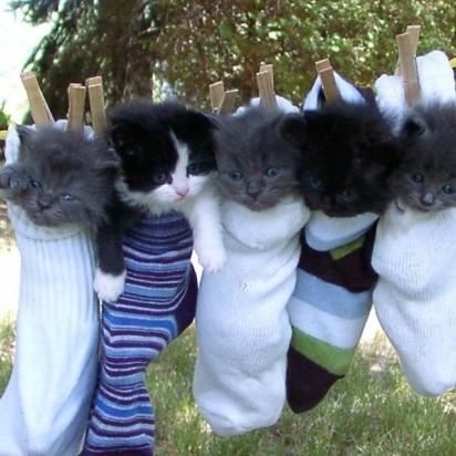 灰猫ハチ黒猫黒猫子猫靴下