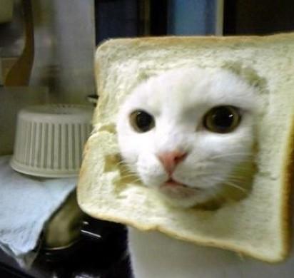 白猫食パン