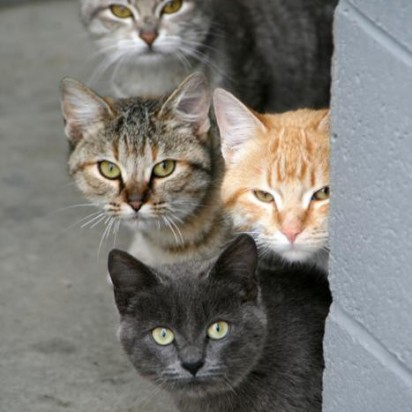 黒猫茶トラ猫キジトラ猫サバトラ猫