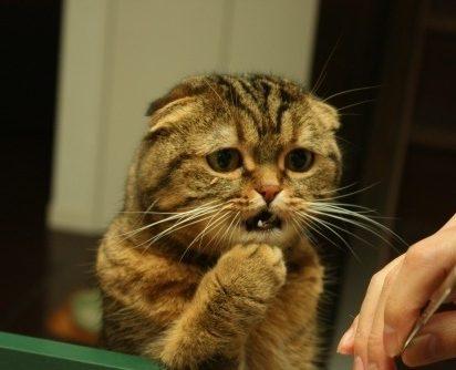 キジトラ猫心配