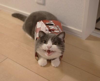 灰白猫スーパードライ