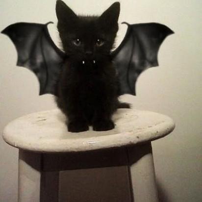 黒猫子猫コウモリ
