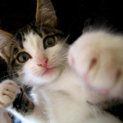 キジトラ猫パンチ